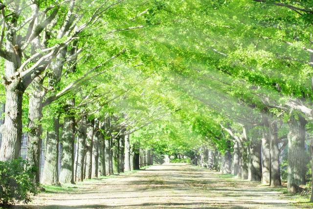 紫外線の対策6選の画像